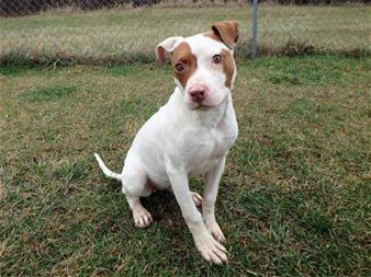 Calhoun County Animal Center dog for adoption